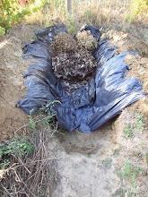 Photo: rá jön őszi lomb, kerti zöld hulladék.