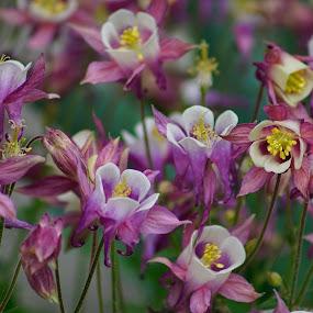 flowers by Donna Davis Kasubeck - Flowers Flower Gardens (  )