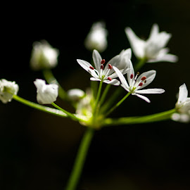 a little flower by Carmelo Parisi - Flowers Flowers in the Wild