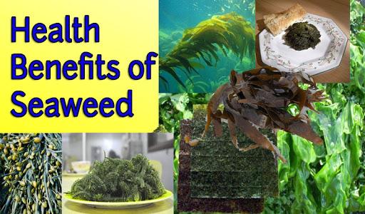 玩健康App|海藻对健康的好处免費|APP試玩