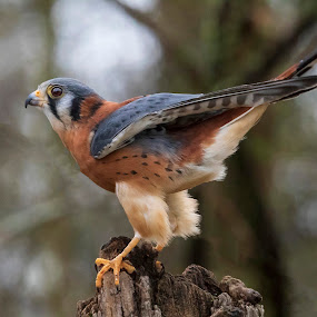 by Kym George - Animals Birds (  )