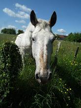 Photo: le cheval qui a pincé Françoise!