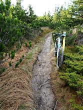 Photo: Szlak genialny, wąski singiel w kosodrzewinie, szkoda, że pod górę ;)