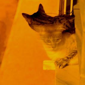 by Anabela Henriques - Uncategorized All Uncategorized ( cats, animals, movement )