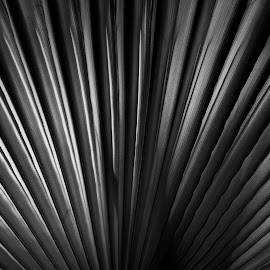 by Estislav Ploshtakov - Black & White Abstract