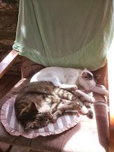 Photo: Ptysiek i Kluska na jednym fotelu