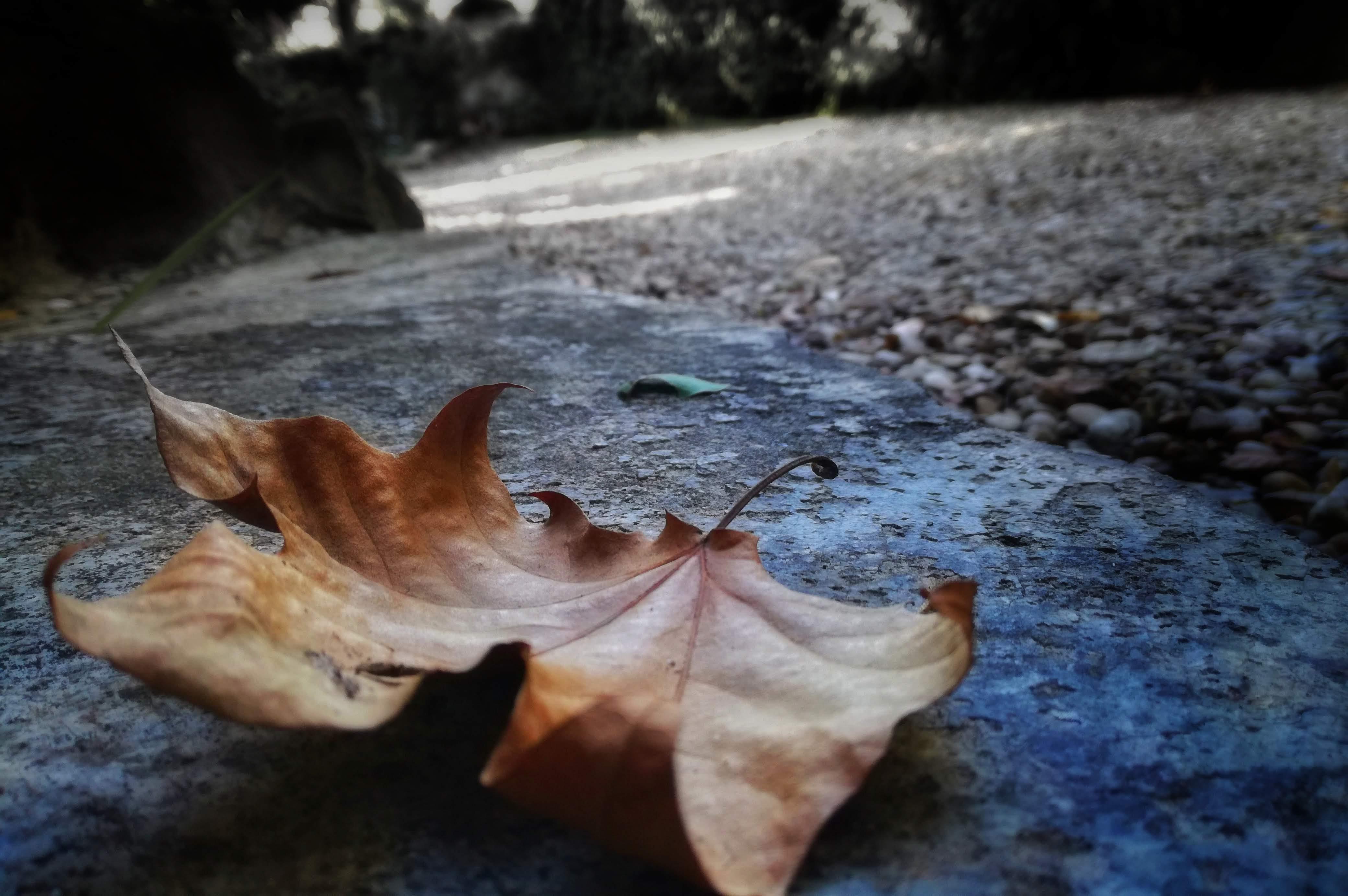 A terra.  di claudia_pianini