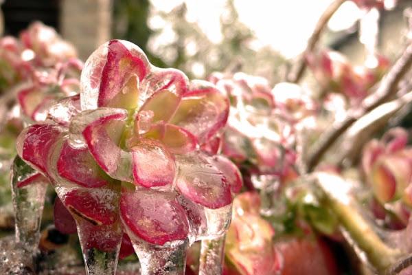 Rosso di ghiaccio di lucafrancesco.gariba