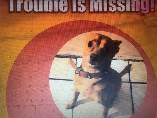 Trouble, MISSING Aug 19, 2019