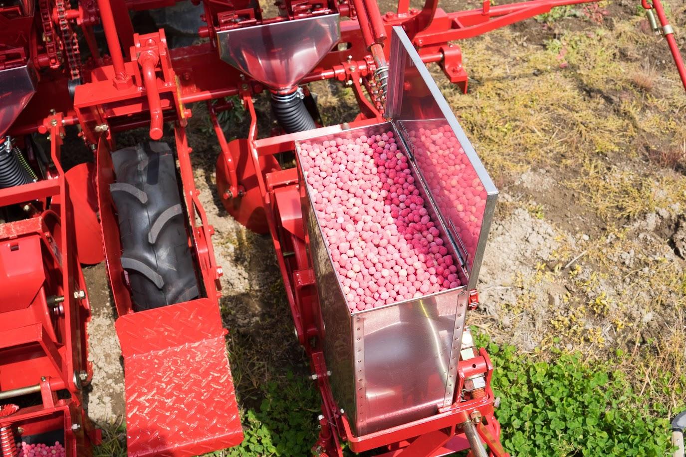 消毒済みの大豆の種子