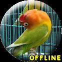 MP3 Lovebird Paud Offline icon