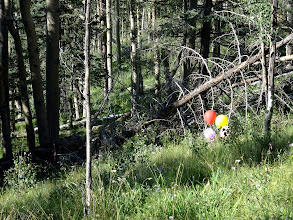 Photo: Balloons in the wilderness!? I was way off trail at this point (having lost it in a large burned area), and deep in the wilderness. These balloons, some still filled with helium, must have floated in from a long way off. I popped them and carried them back out.