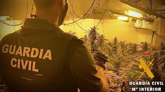 170 plantas de marihuana en un cultivo 'indoor' en La Mojonera