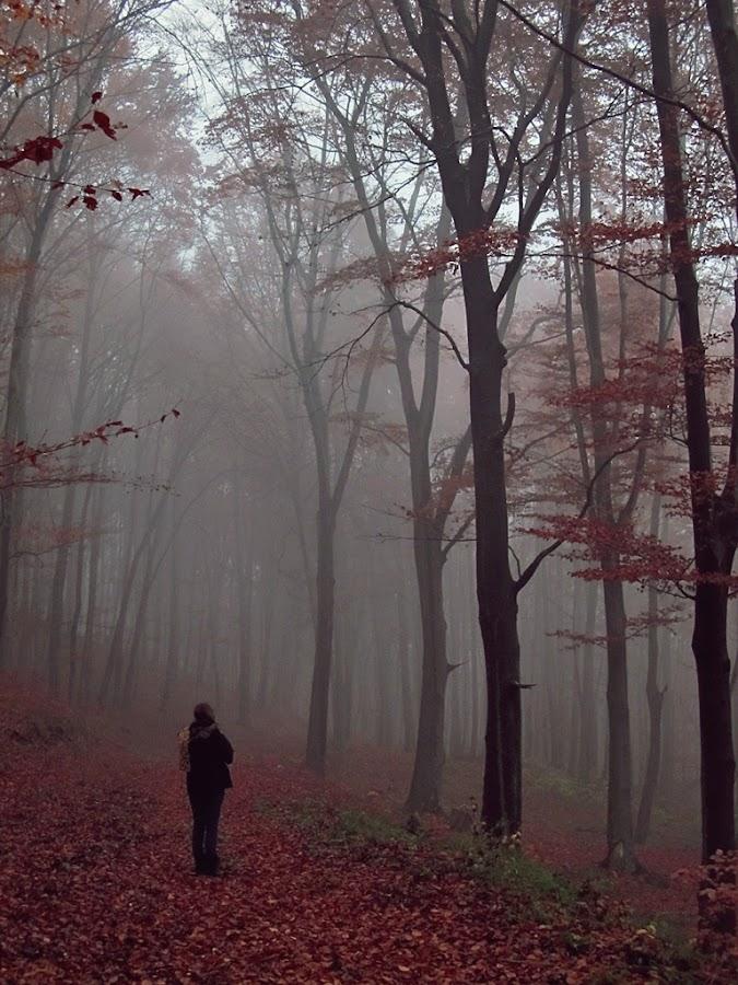 Hidden forest by Jadranka Bužimkić - Landscapes Forests