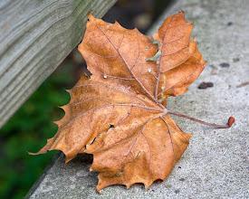 Photo: +Leaves On Thursday