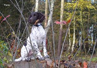 Photo: FERRE in het bos