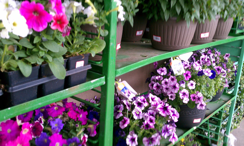 Photo: It was odd to see so many flowers for sale, when it was so cold and rainy that day!