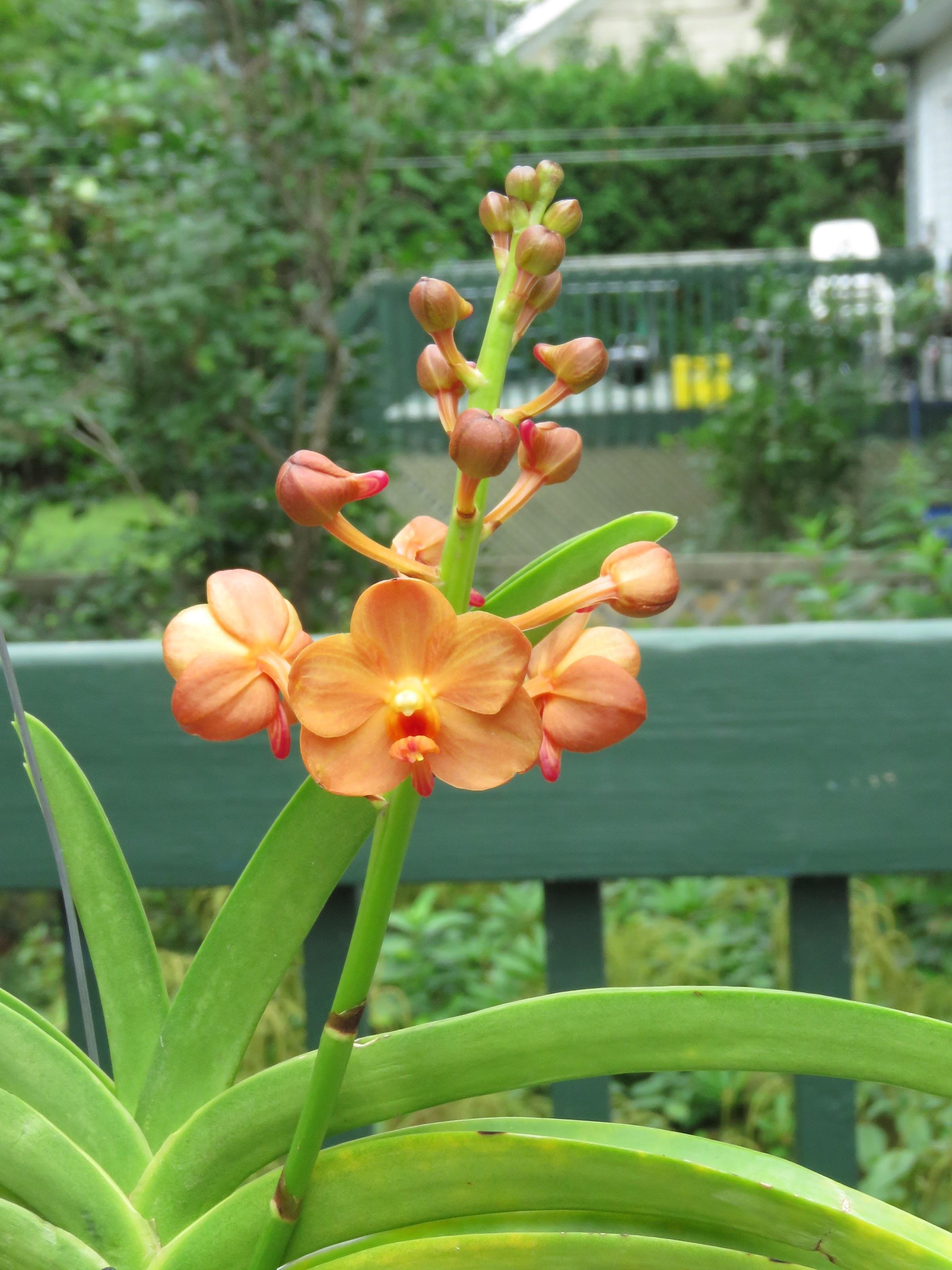 Les orchidées de Grigri - Page 8 Xb7LVlsp7Sf1Ns0dFEfTEk7uioxA66_ULpXuw21y8LDX-nWc5X0zoi0nl9aLkTMspYDmLHEyMDYNR-V0eyKV4VEG5y4ZFThos0j9N4GoLAOIQHBVkyUJ99wXIEG34PM98sKMkQTYW0A=w2400