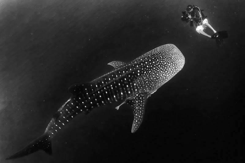 Man and shark di Andrea Izzotti