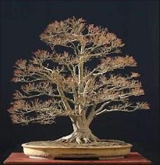 日本の盆栽のデザインのアイデアのおすすめ画像2