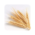 GrainSynth icon