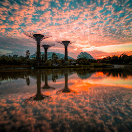 Trees under Flames by Gordon Koh - City,  Street & Park  City Parks ( clouds, tranquil, fiery, reflection, garden by the bay, supertrees, super trees, dramatic, asia, trees, sunrise, singapore )