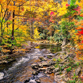 Colors of Fall by John Larson - Landscapes Forests ( forest, fall, color, rocks, stream, trees )