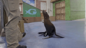 Toddler Sea Lion Scarlett thumbnail