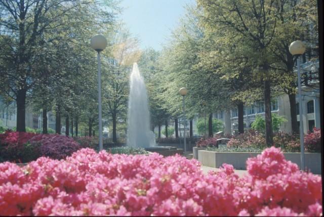 Broad Street in Bloom