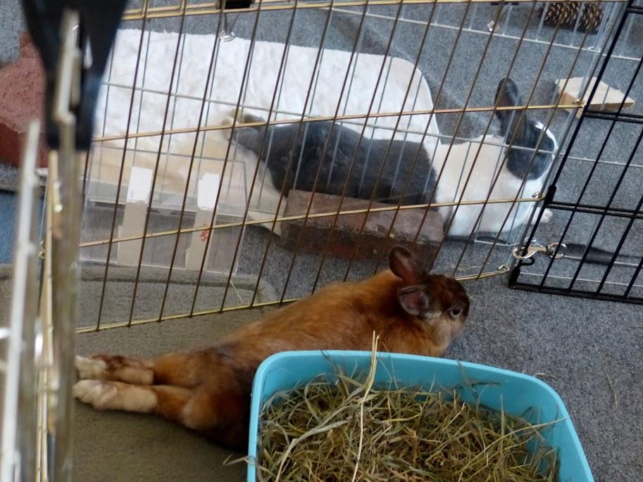 """""""Bunny & Nicki"""""""