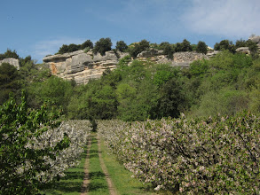 Photo: ... orchards ...