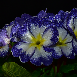 colorful spring flowersd by LADOCKi Elvira - Flowers Single Flower ( spring, nature, flowersa, plants, garden )