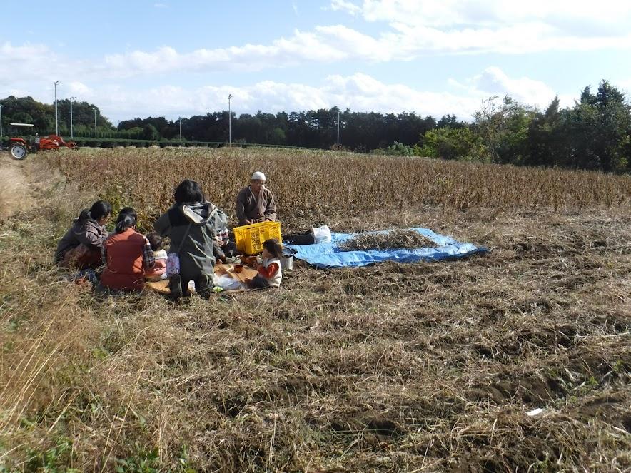 大豆畑で昼ご飯