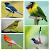 Top 1000 Kicau Burung Mp3 file APK for Gaming PC/PS3/PS4 Smart TV