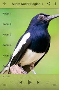 Bird Kacer Hitam Juara - náhled