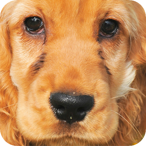 Cocker background 個人化 App LOGO-APP試玩