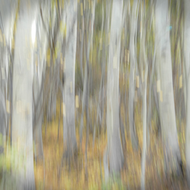 Aspen in Abstract by Gwen Paton - Abstract Patterns ( aspen, abstract, trees, colorado )