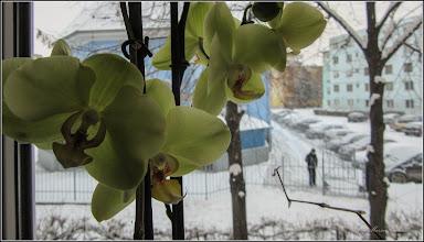 Photo: Al cincelea boboc de orhidee  inflorit - 2018.02.28