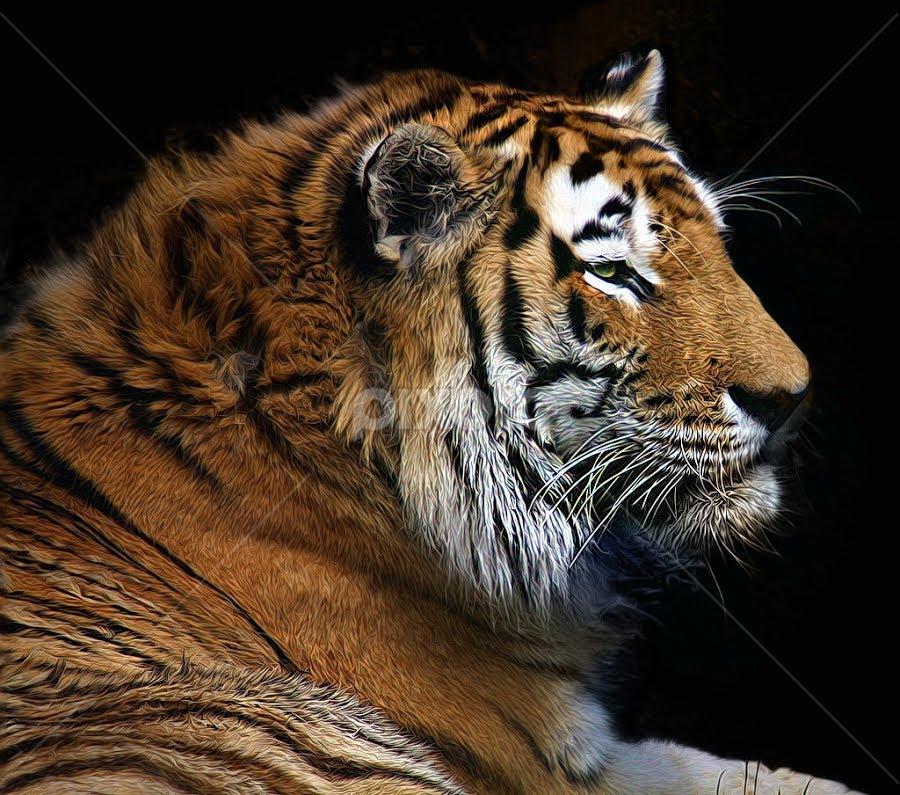 Tiger, Tiger Burning Bright by John Larson - Animals Other Mammals