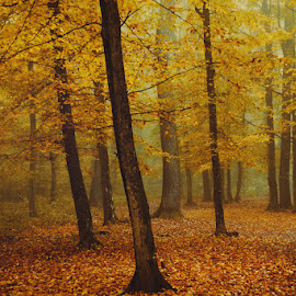 2628 by Zsolt Zsigmond - Landscapes Forests ( fal, forest, leaves, yellow, autumn, trees )