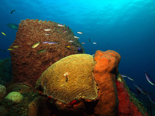 St. Eustatius, a small island near the Virgin Islands, offers warm waters and pristine coral reefs.