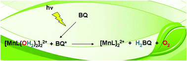 Graphical abstract: Manganese-Schiff base complexes as catalysts for water photolysis