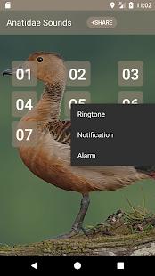 Anatidae Sound - náhled