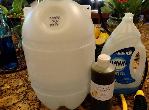 Neem Oil Spray For Garden Pests & Fungal Disease Recipe