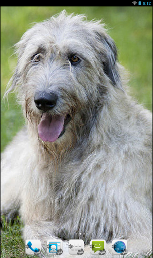 Irish Wolfhound Theme - Nova