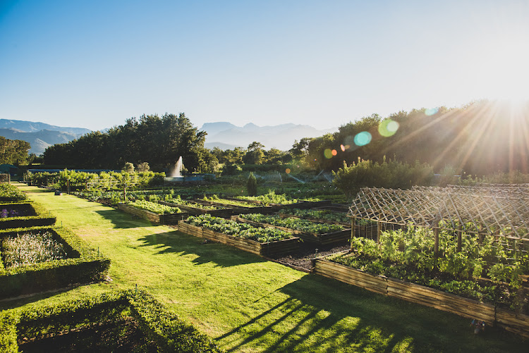 Boschendal uses regenerative farming practices and sustainable gardening, which add to the beauty of the farm. Picture: CLAIRE GUNN