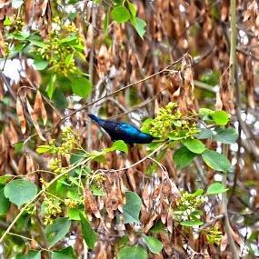 Colourful Bird on Stem by Umair Nayab - Animals Birds ( bird, colourful, bushes, trees, forest,  )