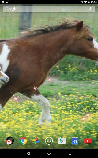 Cute Horses Live Wallpeper