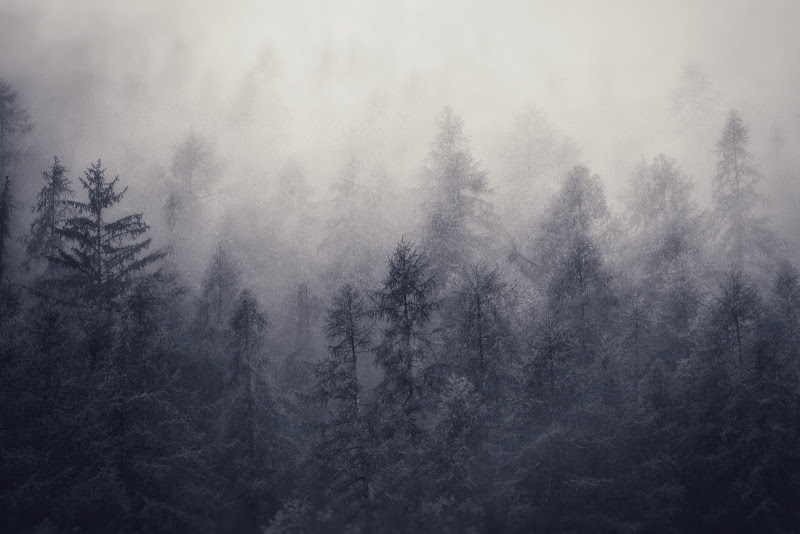 Shrouded in fog di Zafs_77