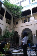 Photo: Higuera en el patio del hotel